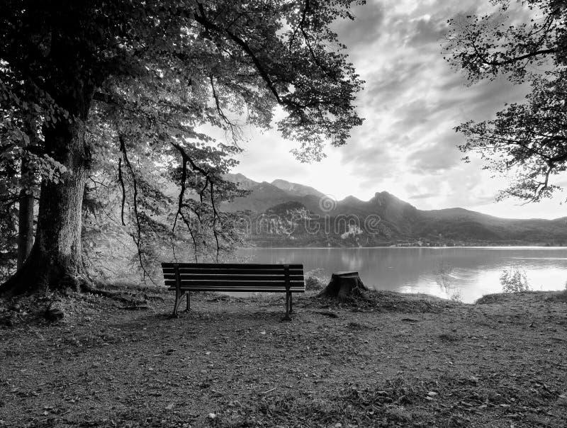 Пустая деревянная скамья на озере горы Банк под деревом буков, стоковое изображение rf