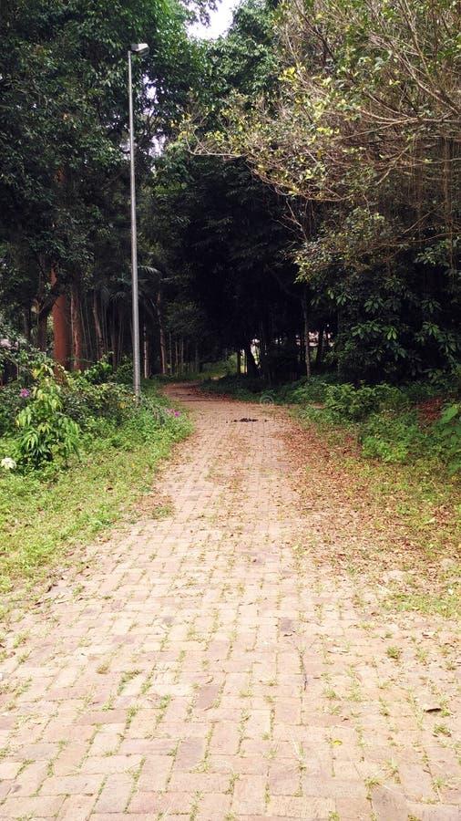 Пустая дорога к джунглям стоковые изображения rf