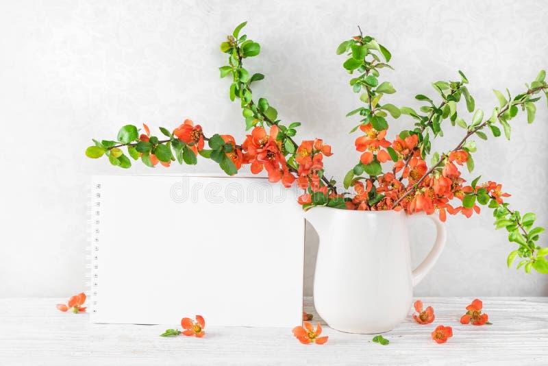 Пустая поздравительная открытка с цветками айвы красивой весны оранжевыми японской на белой таблице r стоковое фото rf