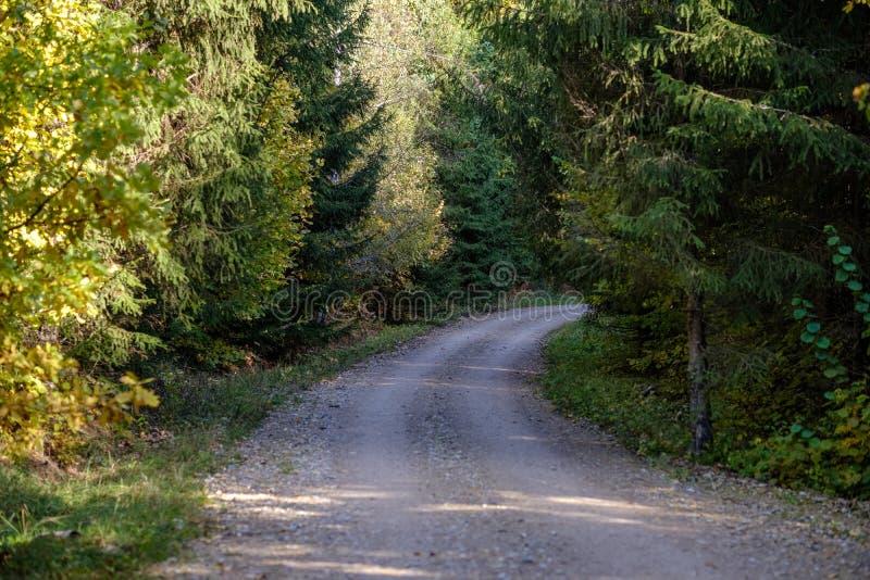 пустая проселочная дорога в осени предусматриванной в желтых листьях стоковое изображение