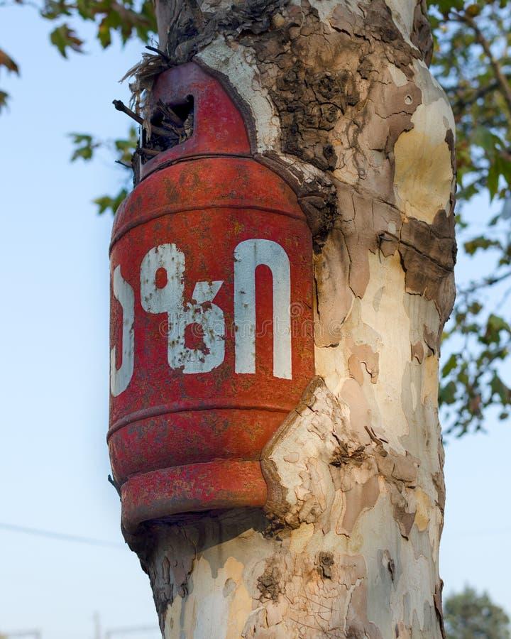 Пустой баллон ingrown в дерево в реальном маштабе времени стоковая фотография rf