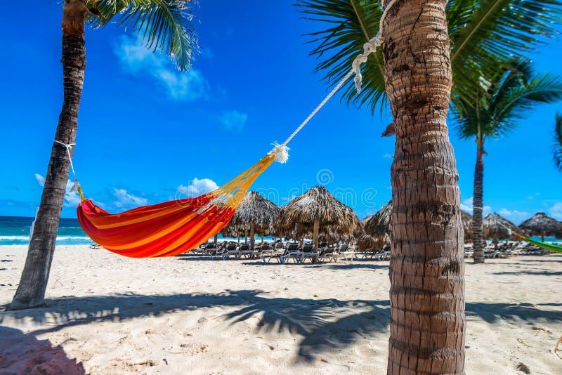 Пустой гамак между ладонями на тропическом пляже стоковое фото rf