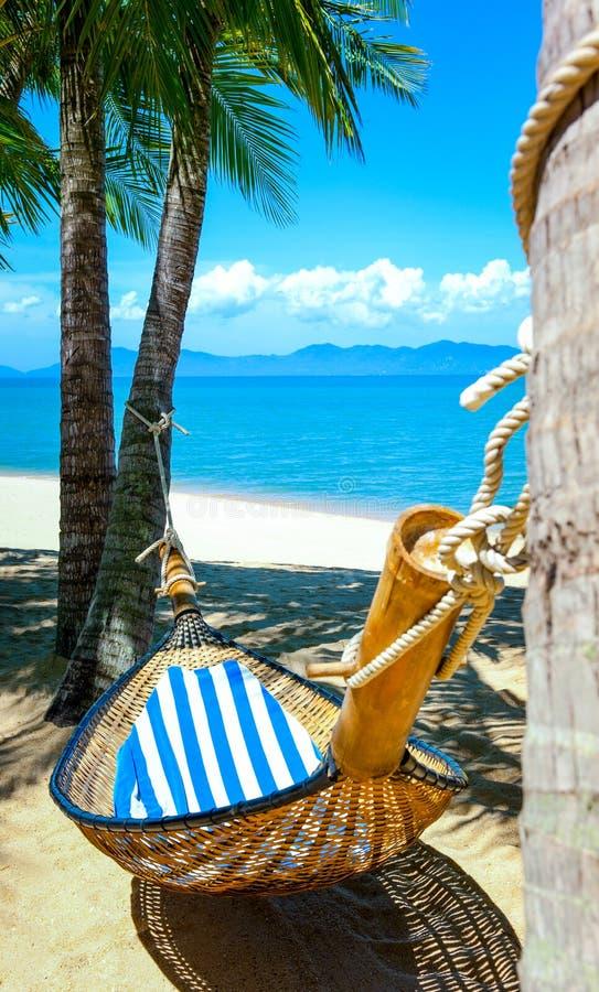 Пустой гамак между пальмами на песчаном пляже стоковое изображение rf