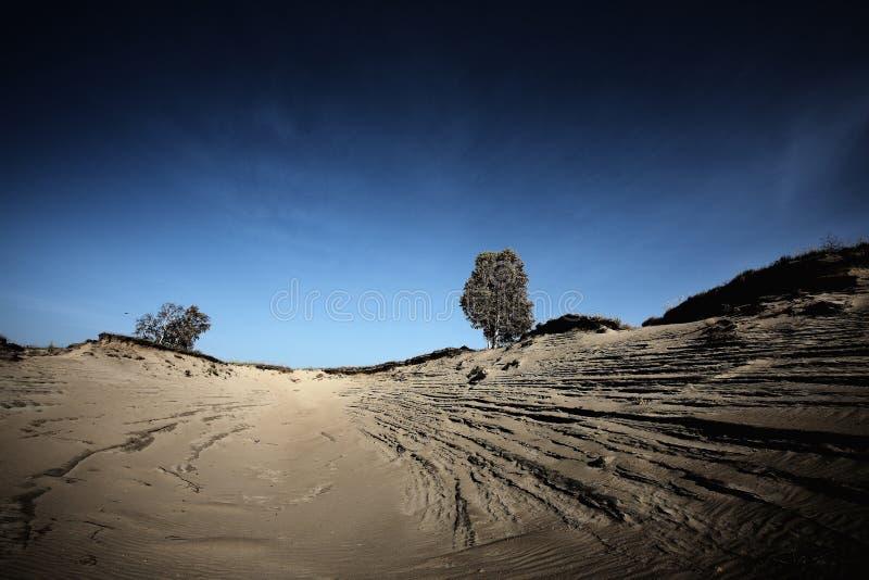 пустыни стоковые изображения