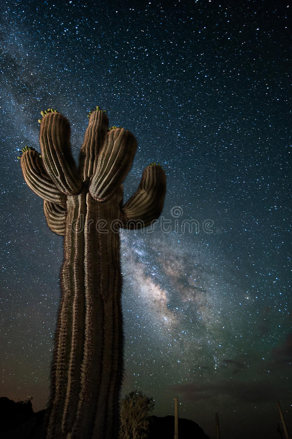 Пустыня Аризоны с кактусом и млечным путем Saguaro стоковые изображения