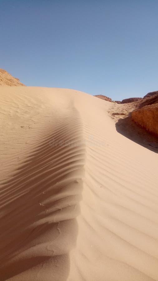 пустыня бдительности стоковые фотографии rf