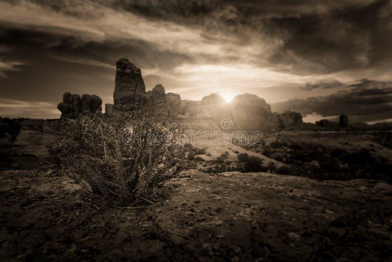 Пустыня: Буш Растёт От Катастрофы В Рок стоковая фотография rf