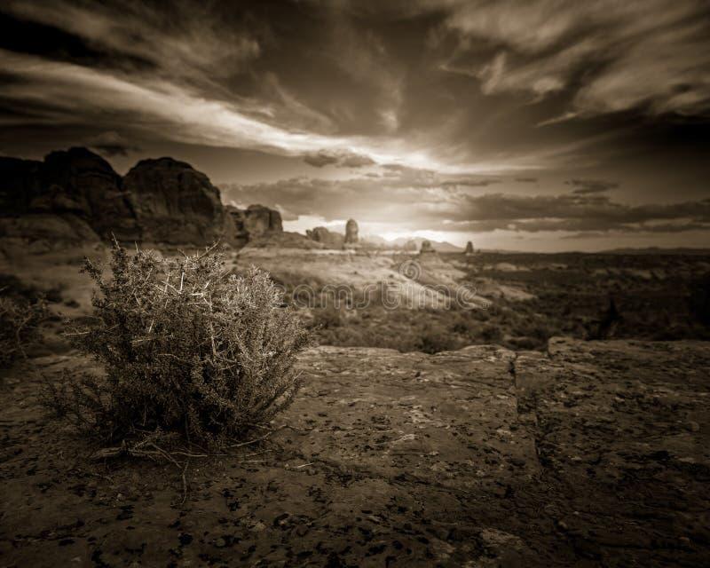 Пустыня: Буш Растёт От Катастрофы В Рок стоковая фотография