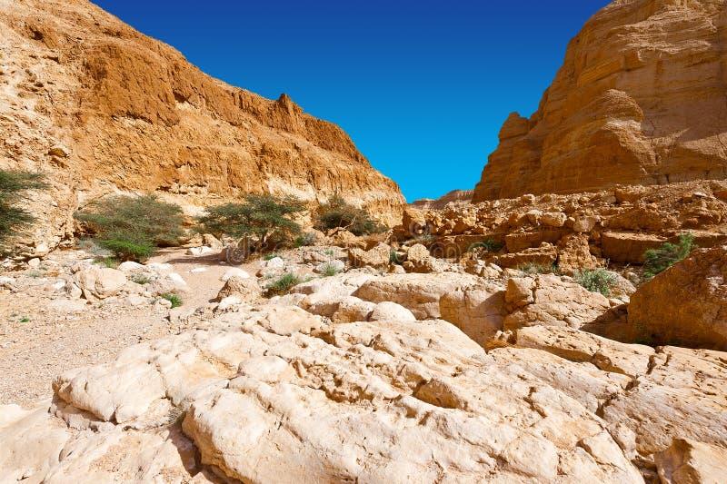 Пустыня в Израиле стоковое фото