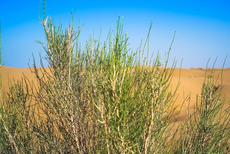 Пустыня в средней Азии стоковое изображение
