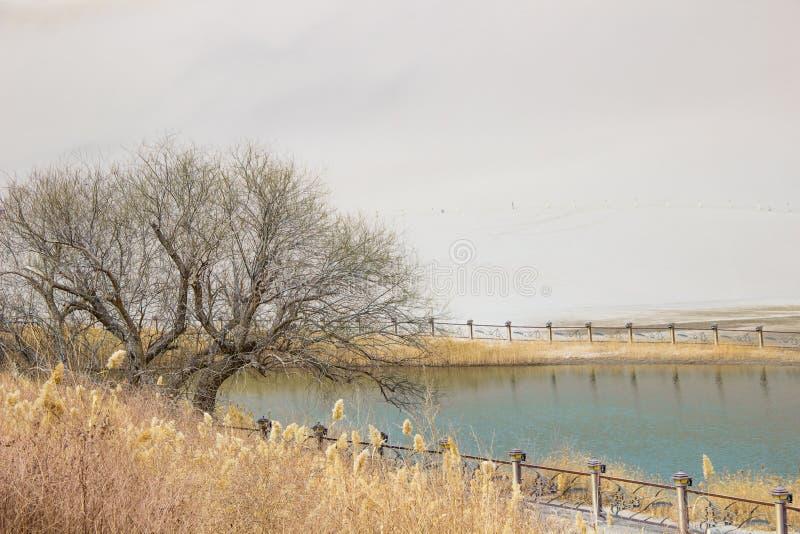 Пустыня и полумесяц Шани Mingsha лунатируют озеро в Дуньхуане, Ганьсу, c стоковые фото