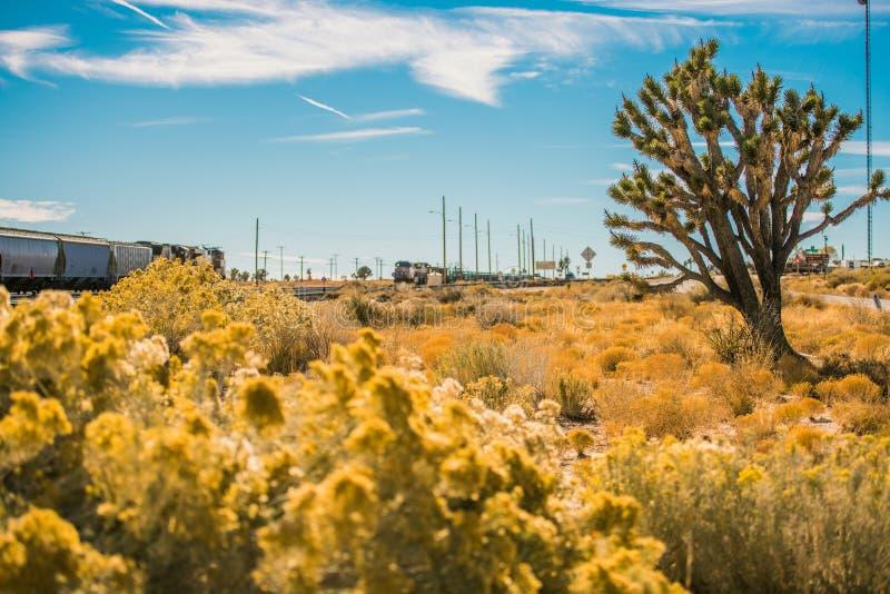 Пустыня Мохаве Калифорнии стоковая фотография