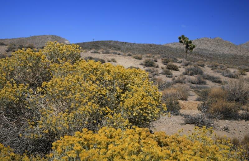 Пустыня Мохаве стоковое изображение