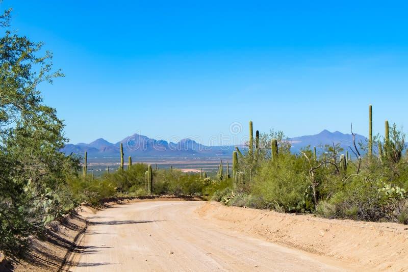 Пустыня обозревает в национальном парке Saguaro стоковое изображение rf