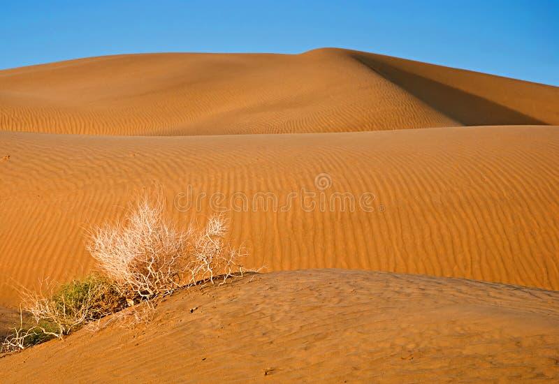 Пустыня песка с голубым небом стоковые изображения rf