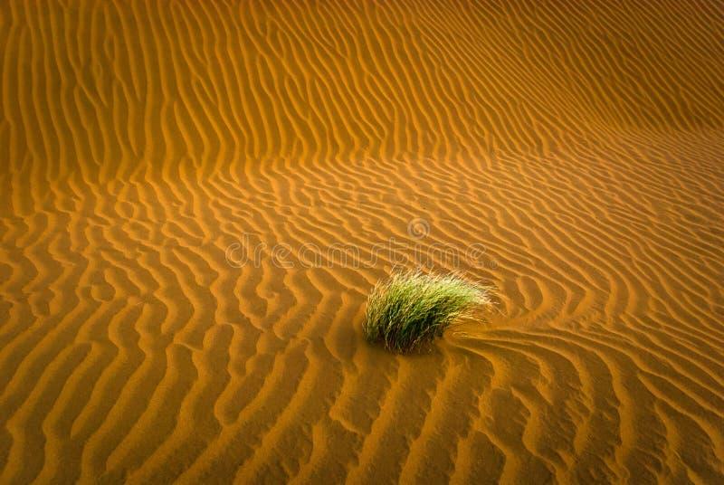 Пустыня песка с травой стоковая фотография rf