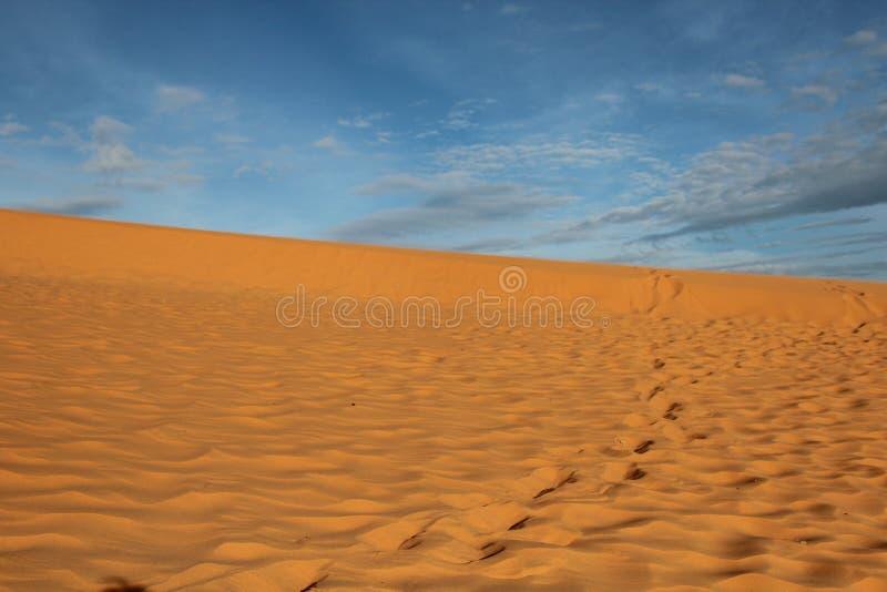 пустыня подняла стоковые изображения rf