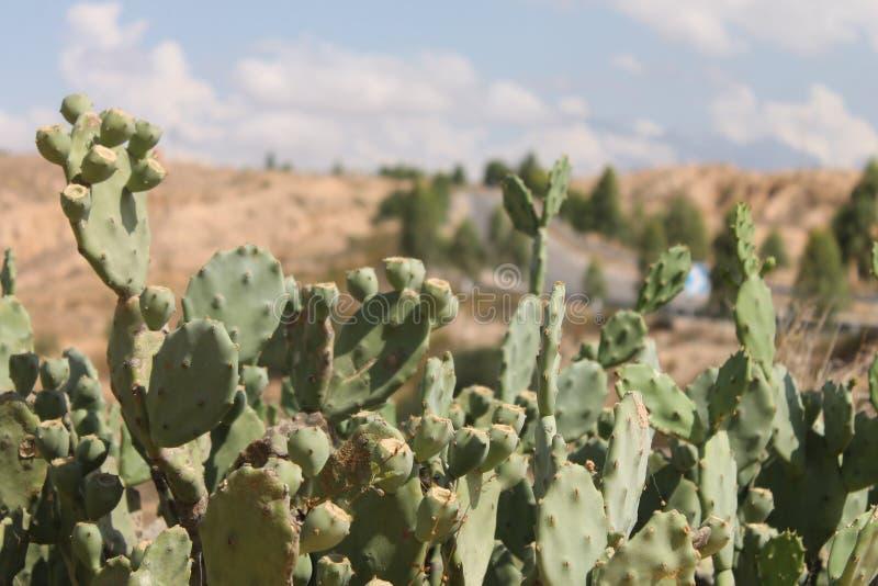 Пустыня Сахары Тунис, Matmata зона Berber в южном Тунисе стоковое фото