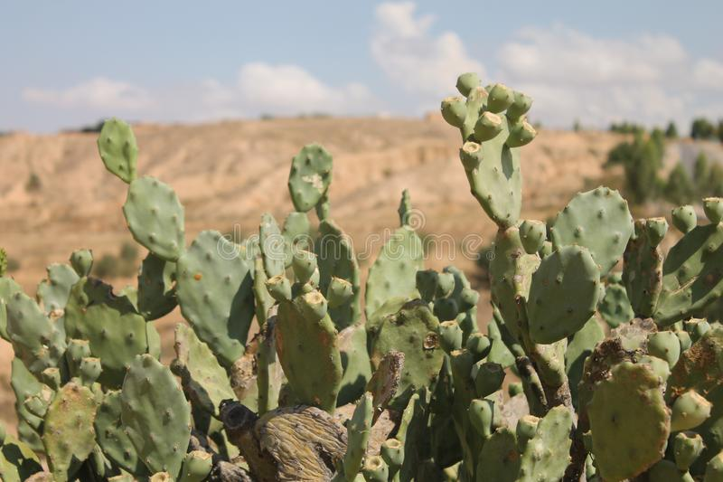 Пустыня Сахары Тунис, Matmata зона Berber в южном Тунисе стоковое изображение