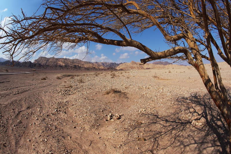 пустыня judean стоковые фото