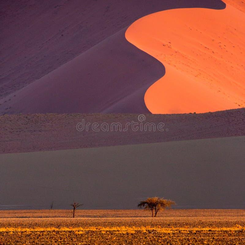 Пустыня Namib, Sossusvlei на заходе солнца стоковые изображения