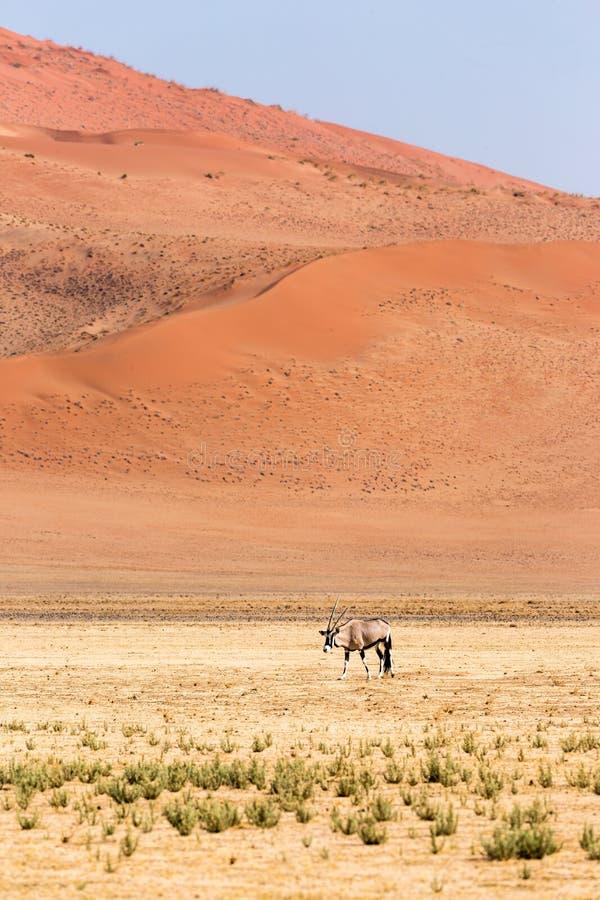 Пустыня Namib, Sossusvlei на заходе солнца стоковое изображение rf