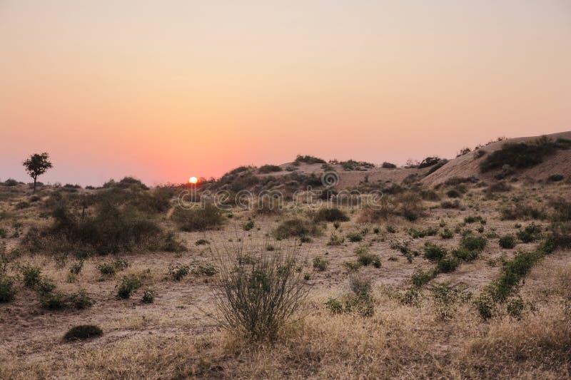 Пустыня Thar стоковые изображения rf