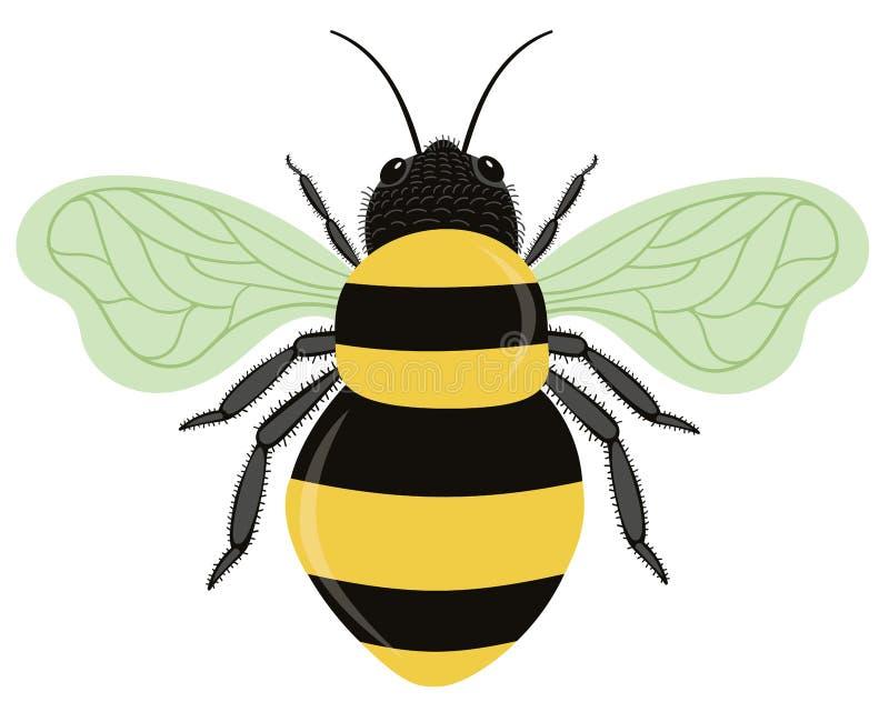 Путайте пчела изолированная на белой предпосылке иллюстрация вектора