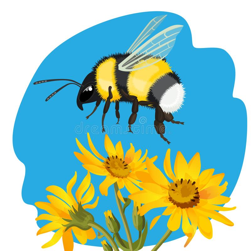 Путайте пчела летая над желтыми цветками на предпосылке неба иллюстрация вектора
