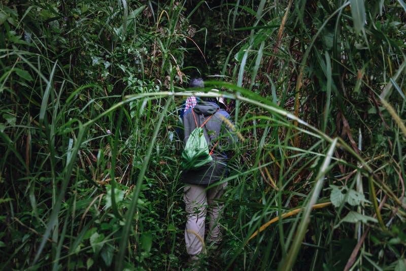 Путешественник на горе идет к Pha Hin Tok в заповеднике Hala Bala стоковые изображения