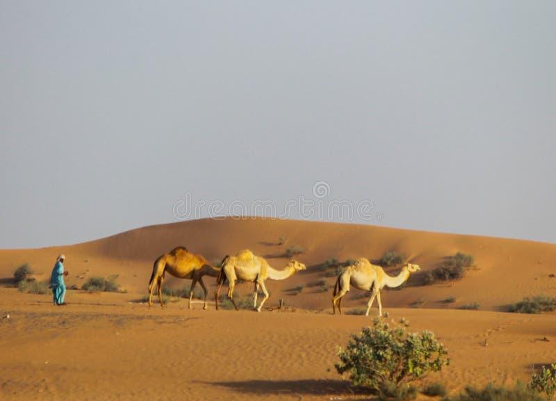 Путешествие в пустыне стоковое фото