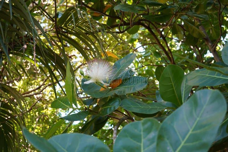 Путешествие Маврикий стоковые фотографии rf