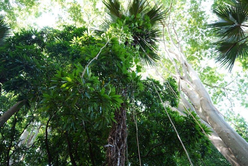 Путешествие Маврикий стоковое фото