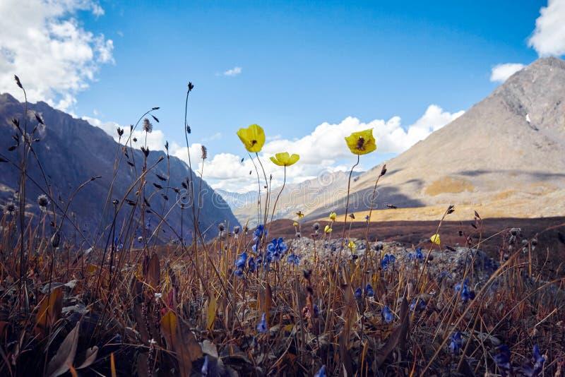 Путешествие пешком через долины горы Красота живой природы Altai, дорога к озерам Shavlinsky, России Пики снежного стоковое фото