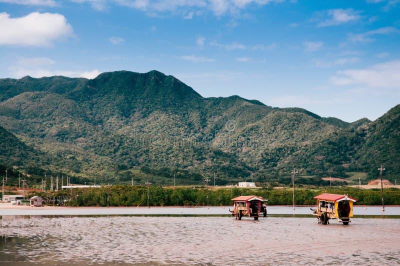 Путешествие тележки Baffalo на пляже на Iriomote, Окинаве, Японии стоковые изображения rf