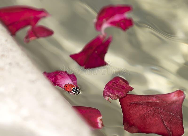 Путешествие Ladybug к дому стоковое изображение