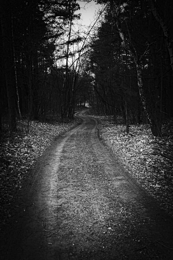 Путешествованное меньше дороги - древесины стоковое фото