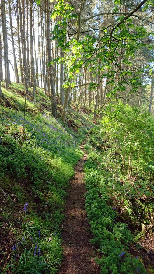 Путь вдоль лесистого речного берега стоковые изображения rf