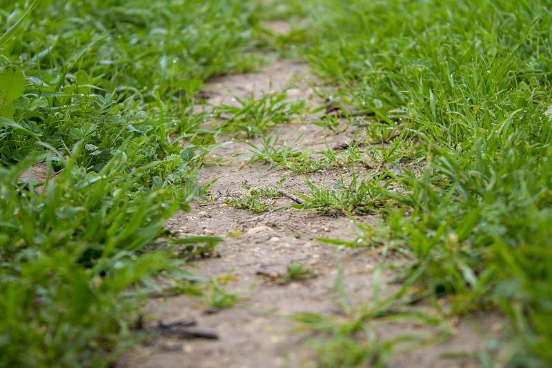 Путь верно трава стоковое изображение rf