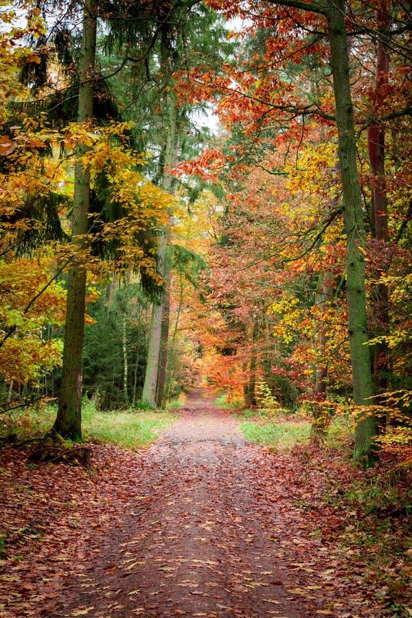 Путь вполне листьев в старом лесе на осени, Польше стоковое фото rf