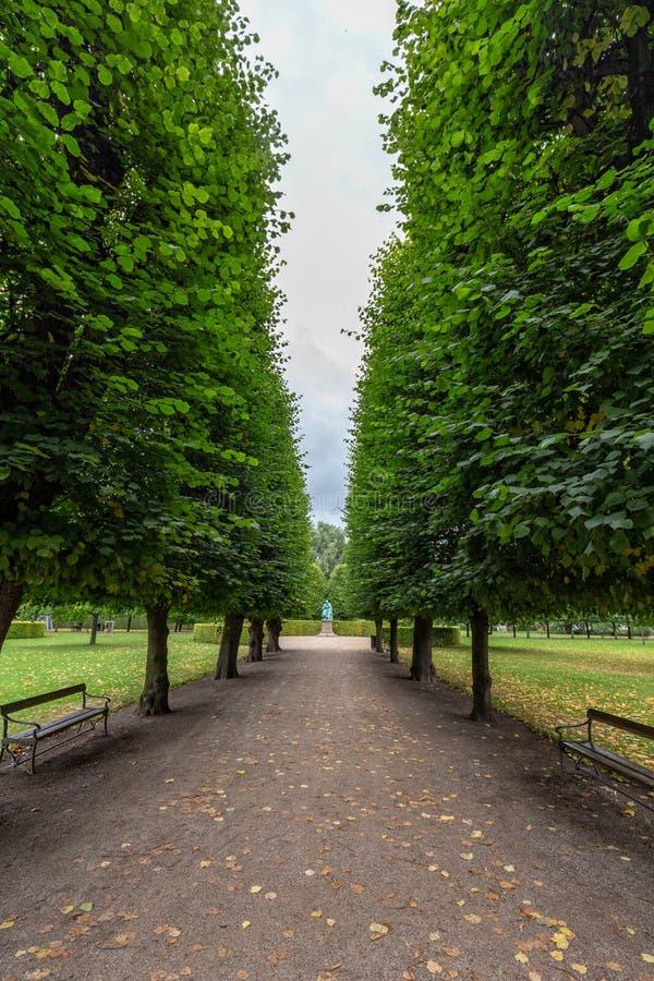 Путь выровнянный деревом стоковые фотографии rf
