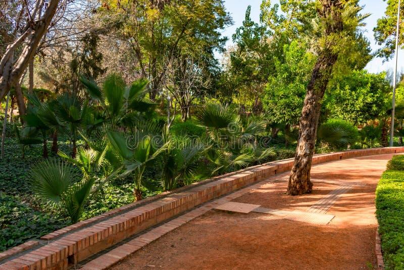 Путь выровнянный с заводами и пень дерева на парке кибер в Marrakesh Марокко стоковое фото rf