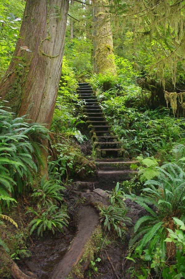 Путь в воздержательном тропическом лесе стоковая фотография rf