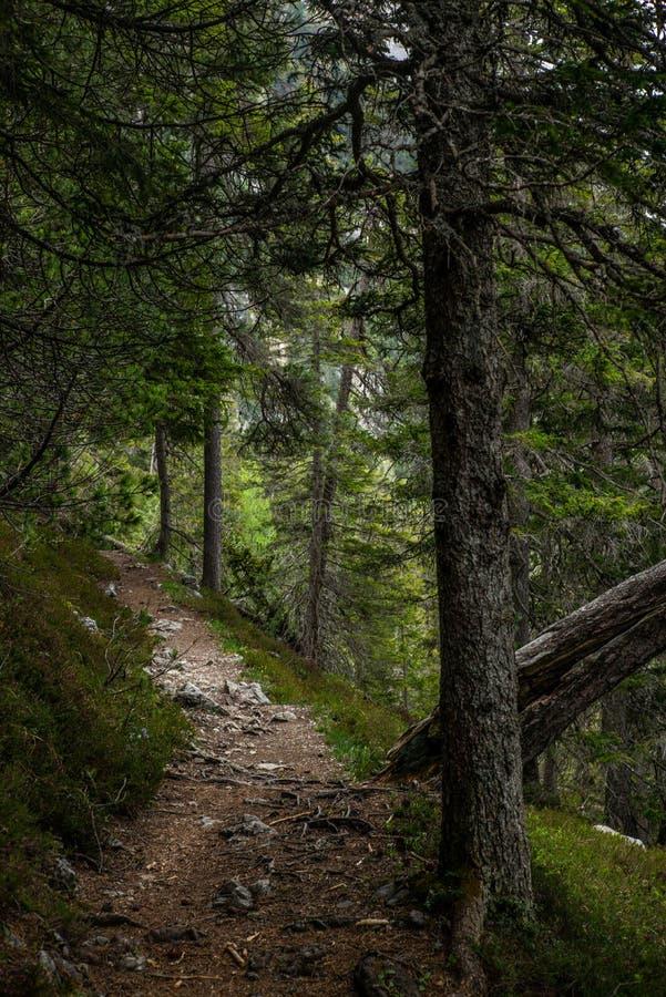 Путь в древесинах Ленцерхайде в швейцарских Альп летом - 3 стоковое изображение