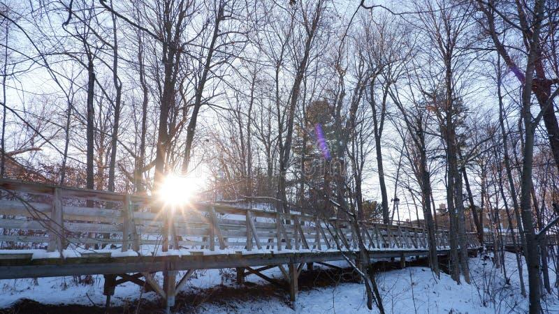 Путь в древесинах стоковые фото