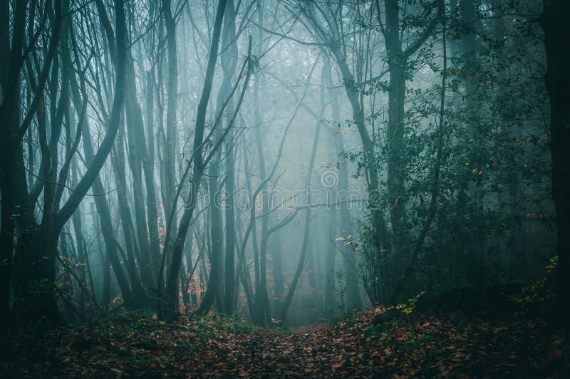 Путь в жутком, атмосферическом лесе на туманный день осени в красиво атмосферическом лесе стоковое изображение