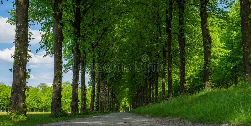 Путь в лесе на солнечный день стоковое фото rf