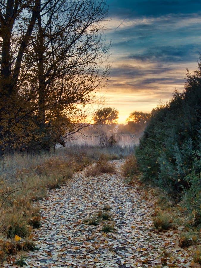 Путь в портрет тумана стоковое фото rf