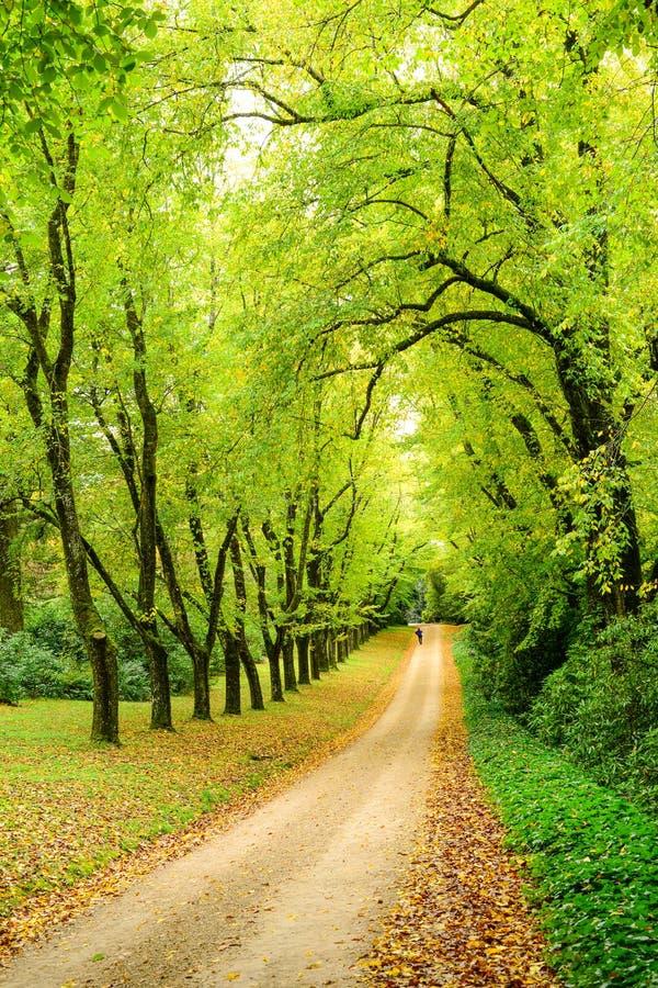 путь в древесинах весной стоковые изображения rf