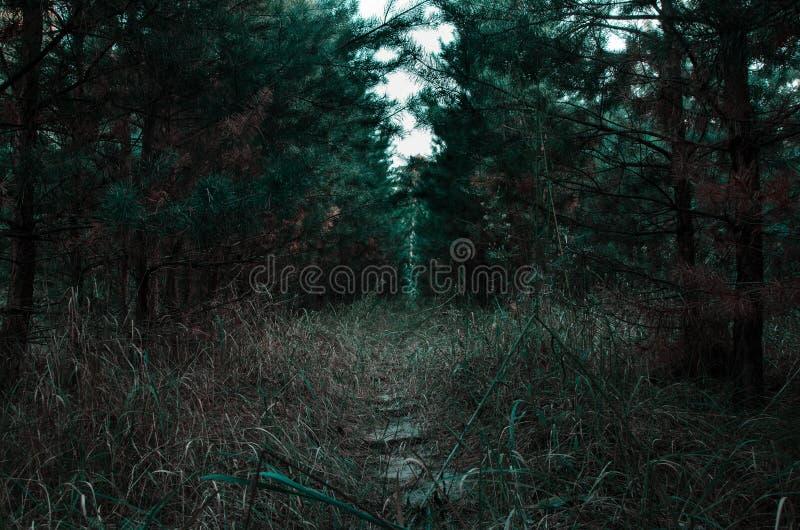 Путь в древесинах молодых стоковая фотография rf
